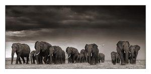 05_elephants-egrets-after-st