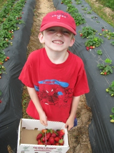 Strawberry picking 010
